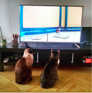 youtube, cats and tv, cats watching tv, tv watching