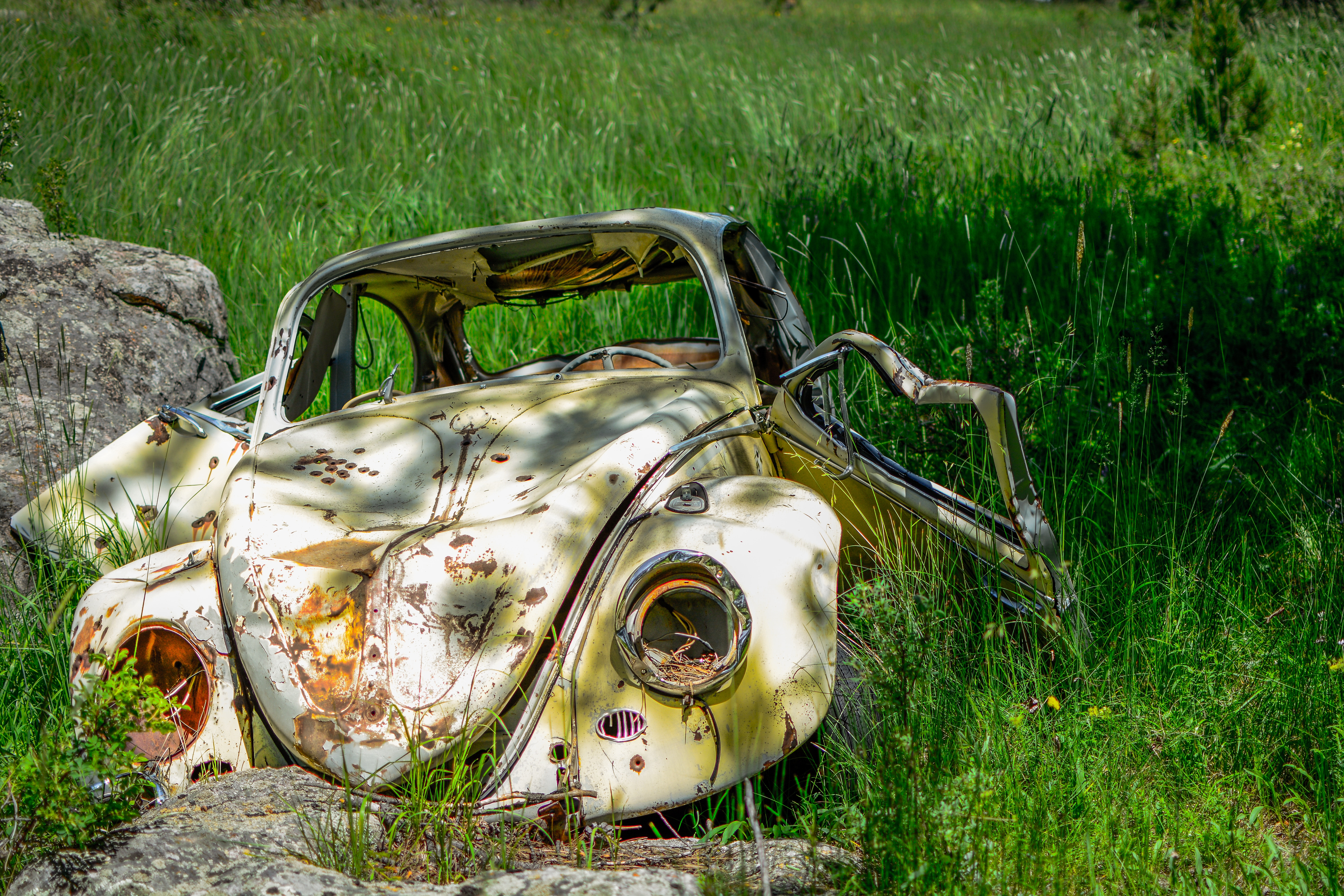 A rusted and abandoned Volkswagen Beetle in a field